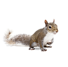 Squirrels Pest Control West London